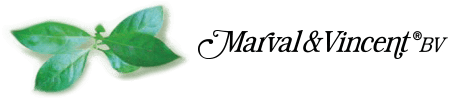 Marval & Vincent logo